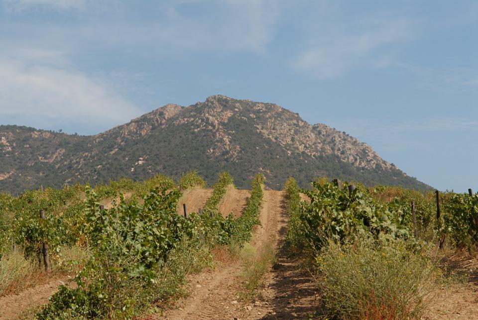 vin_granajolo_pinarello